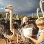 Foto de Carmens Guest House and Ostrich Farm