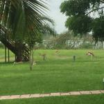Mubanga Lodge Photo