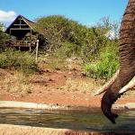 Elephant at our Waterhole
