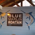 Bild från Blue Marlin