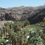View of Palm Canyon in the Indian Canyons, Palm Springs