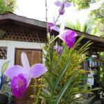 Blick auf Orchideen im Garten, Gemeinschaftküsche im Hintergrund