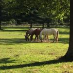 Pasture with a few of the horses.
