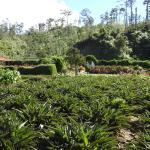 Jardin Ave del Paraiso