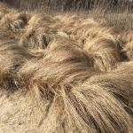 gorgeous wild grasses