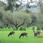 Deer and other animals roam freely and unafraid
