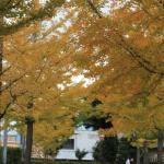 Foto de Geijutsunomori Park