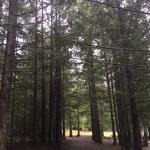 A canopy of everygreens Spider Lake Provincial Park, Qualicum Beach, BC