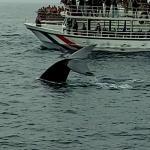 mirissa sri lanka Blue whale