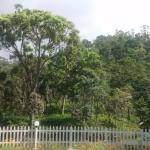 Tabernacle Resort Photo