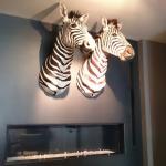 Photo of Les 2 zebres