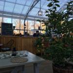 The orange tree inside the beer garden