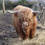 friendly Coo !!