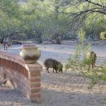 Foto di Hacienda del Desierto Bed and Breakfast