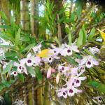 Orquídeas de Nuestro Jardín