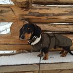 Ein toller Winterkurzurlaub mit Hund, der sehr willkommen war!