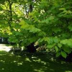 Foto de Greenmantle Estate