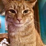 In-house cat 'derrick'