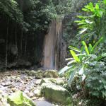 Tropical Garden near Soufriere sSaint Lucia