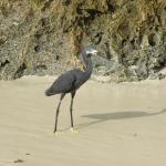 Bird on the beach