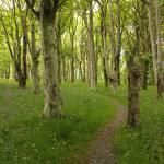 Woodland path through the Loch Gruinart Nature Reserve