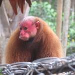 Mono en Mariposario Pilpintuwasi