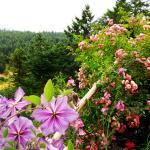 Your private garden