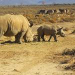 during the safari