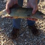 Trout fishing at Roaring River State Park