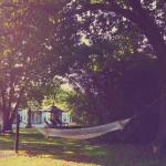 Landscape - Bloomestate Swellendam Photo