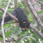 Zum ersten Mal diese Hörnchenart gesehen