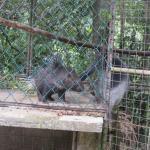 Affe will Futter vom Stacheltie klauen