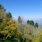 Gingko Path