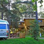 Albirondack Camping Tarn : Cabane Perchée
