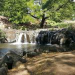 300 yard walk through Liliuokalani Botanical Gardens to scenic picnic ground
