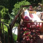 Livian Guesthouse Photo