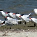 Foto de Laguna Atascosa National Wildlife Refuge