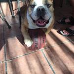 Bruno and his Basketball
