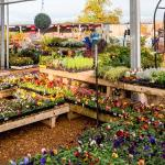 Outdoor area for plants, sheds, landscaping and more