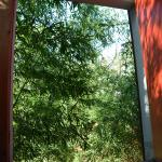 "This is the view out the window I call ""barn door"". Bamboo, I think! So secluded!"
