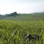 The Albergaccio's view