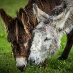 Adopt one of our gorgeous donkeys