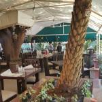 Amazing dining under a mango tree