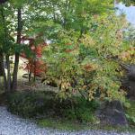 Photo of Kyomunoyado Yamaboshi