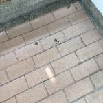 Pigeon droppings on our balcony.