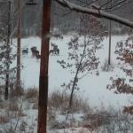 Many Deer