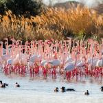 Flamingos! Picture taken by my husband Neil Hayward.