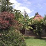 Plants attracting birds