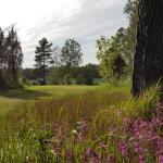 Golfbana, hål 7