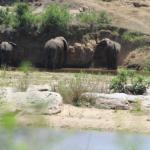 Landscape - Marloth Park Aamazing River View Photo